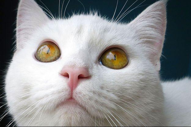 """En l'espace de deux ans, au moins 500 chats auraient disparu d'après un recensement du collectif """"Chats disparus 91."""""""