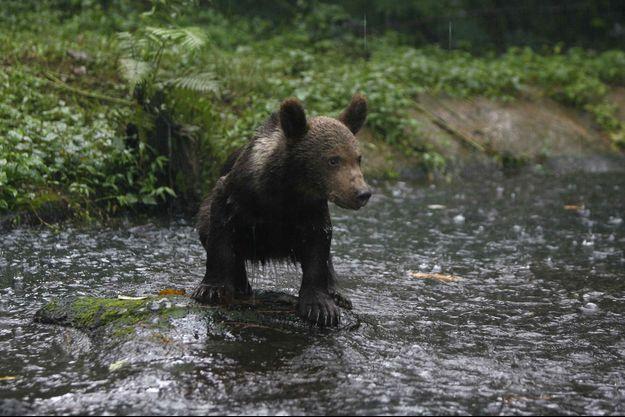 Un ours en Indonésie (image d'illustration).