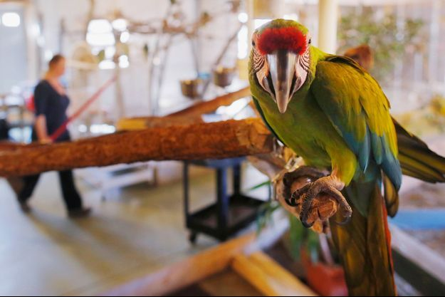 Hercule le perroquet a permis d'élucider le meurtre de sa propriétaire (photo d'illustration).