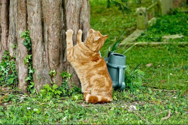 Un tueur en série de chats a été condamné à cinq ans de prison (image d'illustration).