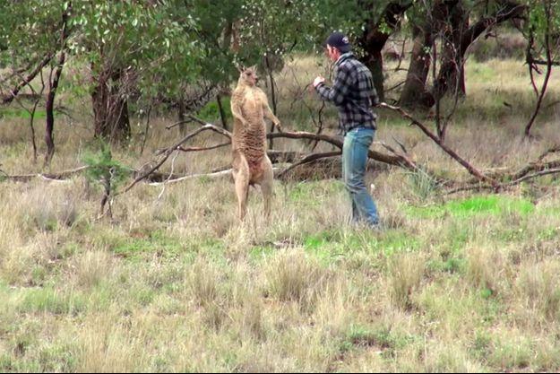 Capture d'écran du kangourou et de Greig Tonkins dans la vidéo