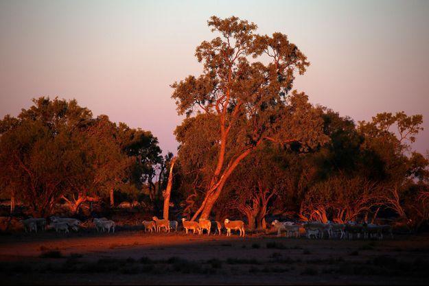 Photo prise dans le Queensland en Australie.