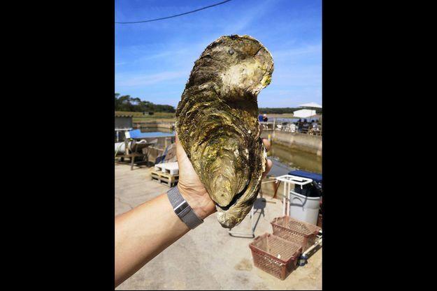 L'huître Georgette trouvée le 2 août à Talmont-Saint-Hilaire (Vendée).