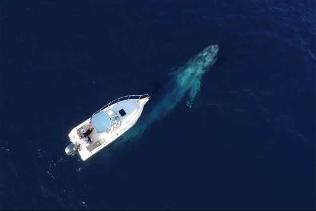 Un baleineau a surpris un Californien qui était sur son bateau près de San Diego.