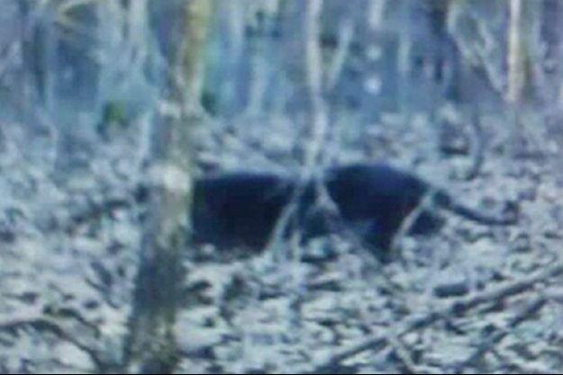 L'animal mystérieux photographié à Christian County, région rurale du Missouri.