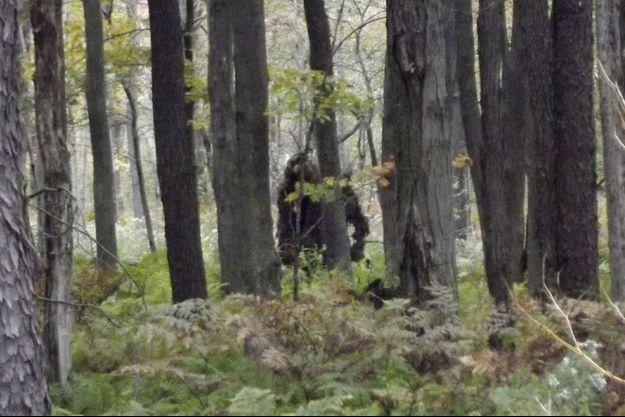 Un bigfoot prétendument photographié en 2013 en Pennsylvanie. La stature de cette créature dont l'existence reste sujette à caution rappelle celle du gigantopithèque, singe géant disparu il y plusieurs centaines de milliers d'années.