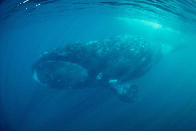 Sous l'océan Arctique