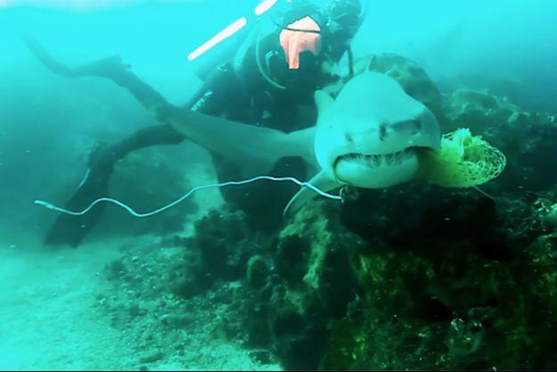 Inaki Aizpun et le requin-taureau.