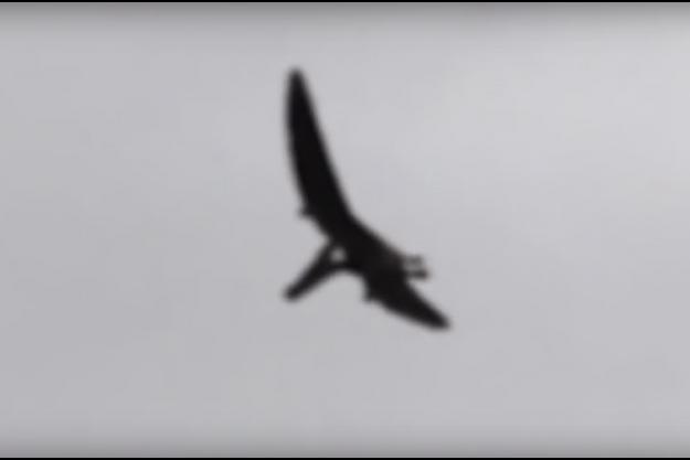 Une image tirée de la prétendue vidéo du ptéranodon filmé dans l'Idaho.