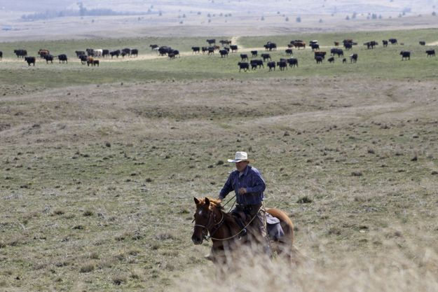 Un troupeau en Oregon, Etat frappé par une vague de mutilations de bétail.