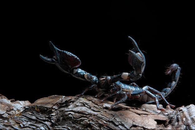 Photo d'illustration d'un scorpion