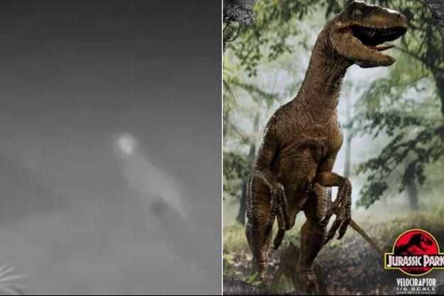 A gauche, l'étrange animal filmé en Floride dans lequel certains croient reconnaître un vélociraptor.