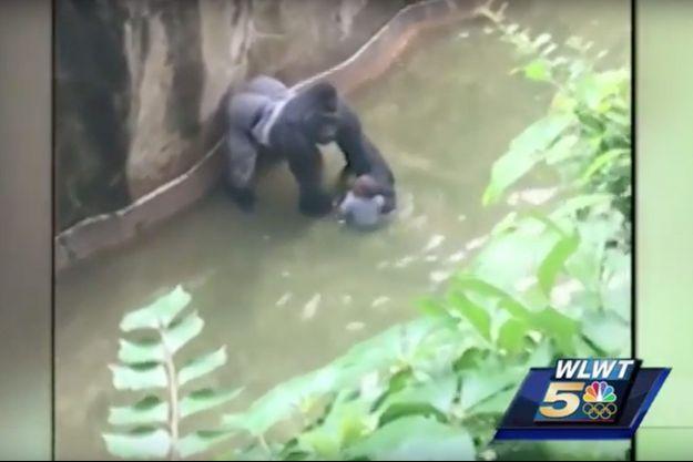Capture d'écran d'une vidéo montrant l'enfant tombé dans l'enclos du gorille.
