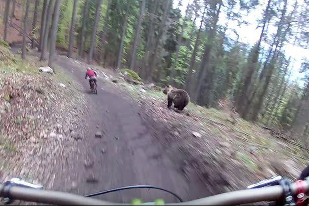 A droite, on peut voir l'ours courir après le cycliste.