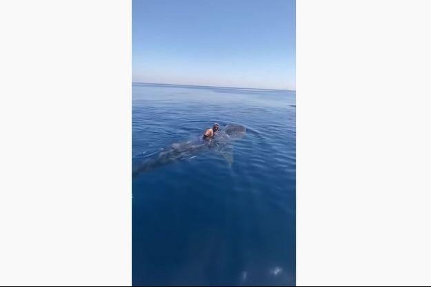 Un homme se tient sur un requin-baleine dans la mer Rouge.