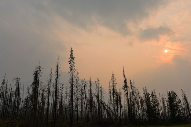 Une forêt en Ontario, Canada.