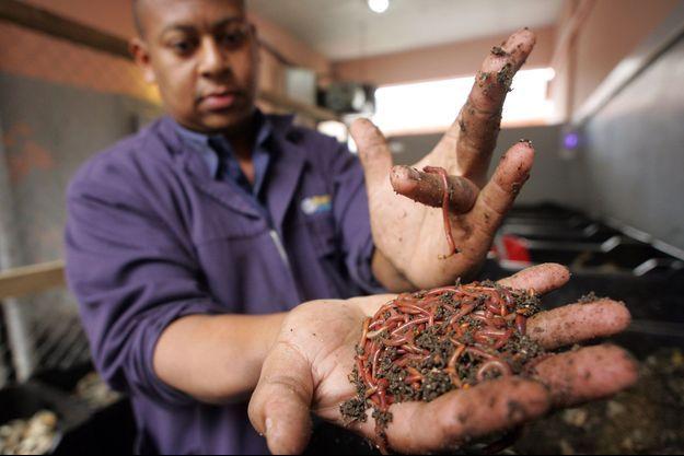 Shaun Gibbons, un agriculteur sud africain, utilise des vers pour labourer sa terre.