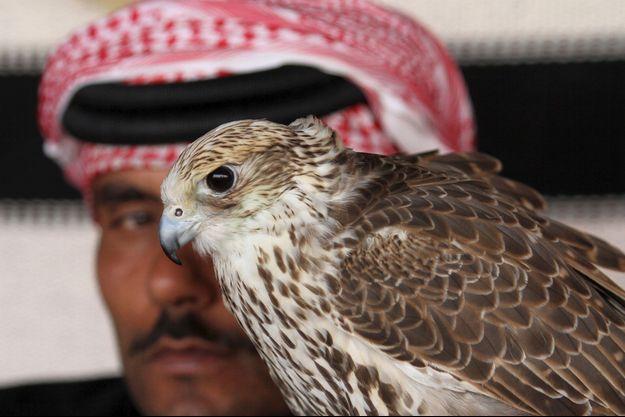 Un magnifique faucon (photo d'illustration)