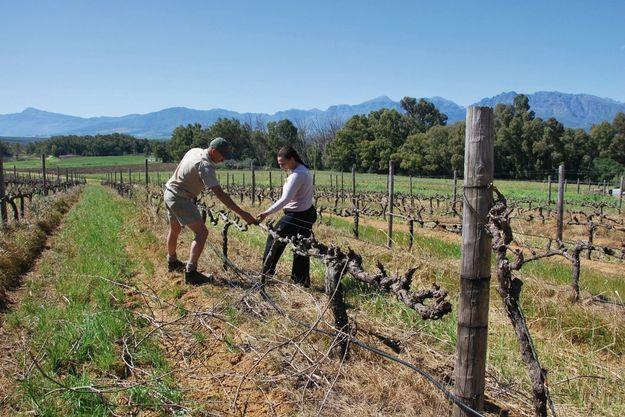 Région de Paarl. Beverly Farmer, ici avec un de ses employés, cultive des vignes qu'elle n'arrive pas à acheter.