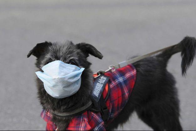 Un chien a été placé en quarantaine à Hong Kong (image d'illustration).
