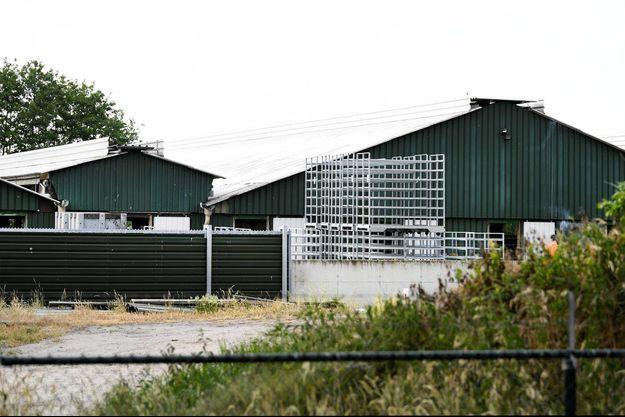 Un élevage de visons, aux Pays-Bas.