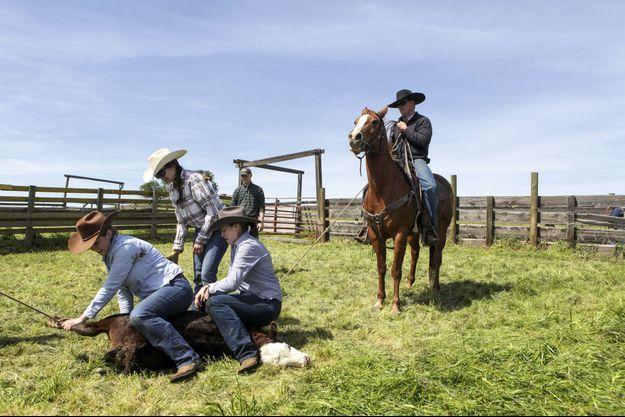 Justina, la fille de Diane Bohna, et ses cousines exécutent le marquage du bétail sous l'œil habitué de ces messieurs.