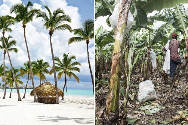 Le contraste est frappant: à gauche, les plages et les hôtels de luxe en République dominicaine. A droite, les plantations de bananes où triment les Haïtiens sous-payés.