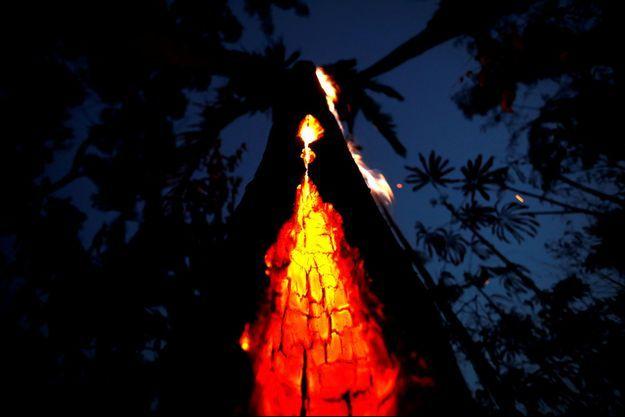 Un arbre qui brûle dans la forêt amazonienne.