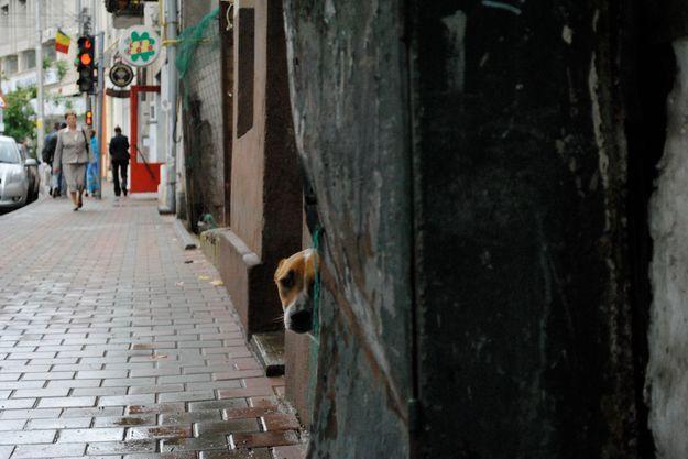 Les chiens errants de Roumanie vont pouvoir être euthanasiés.