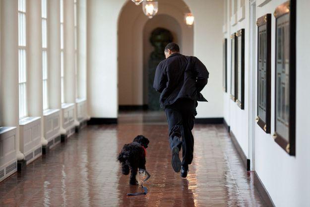 La course à la Maison-Blanche… avec Bo, le chien d'eau portugais offert par le sénateur Ted Kennedy en avril 2009.