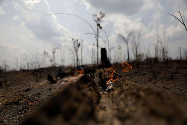 Le feu en Amazonie a ravagé une partie de la forêt.