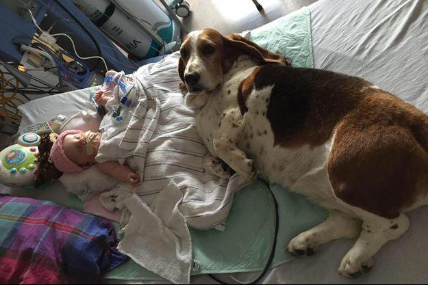 Nora Hall, cinq mois, et Gracie, un des bassets de ses parents.