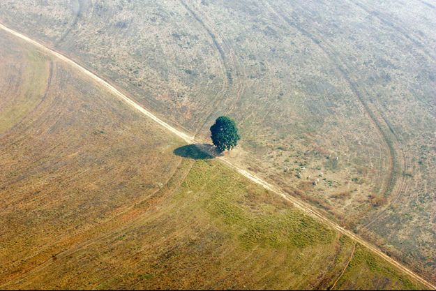 Au Brésil, en 2005 : là où s'étendait une jungle luxuriante, la déforestation n'a laissé qu'un seul arbre.