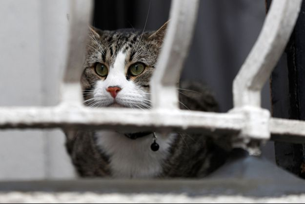 Le chat de Julian Assange au balcon de l'ambassade d'Equateur.