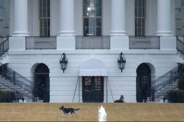Major et Champ, les chiens de Joe et Jill Biden, sur la pelouse de la Maison-Blanche, le 16 février 2021.