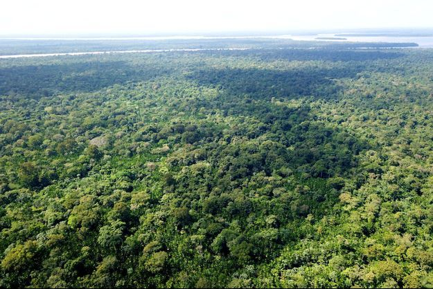 Forêt amazonienne.