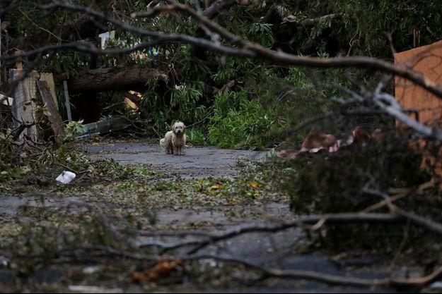 A Porto Rico, Maria a tout détruit.