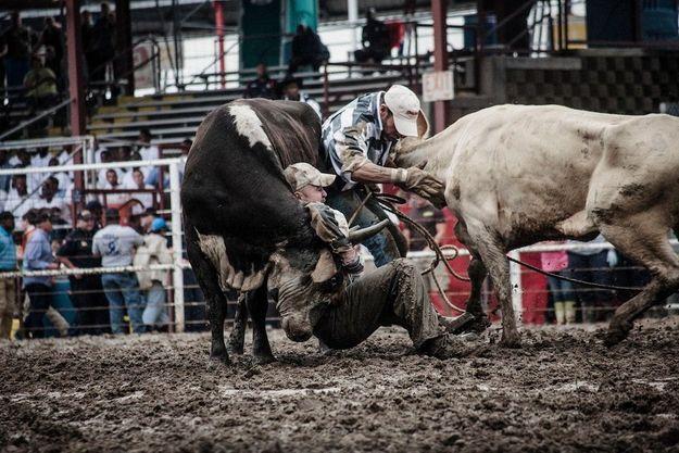 Dans la boue et la chaleur, deux détenus aux prises avec deux vaches sauvages.