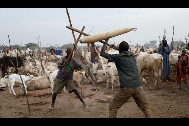 Les Dinkas, nomades et farouches guerriers, ont mené la guerre d'indépendance. Ici, à Wunrek, des jeunes de la tribu, bâtons de combat et boucliers à la main, font une démonstration de leur virilité.
