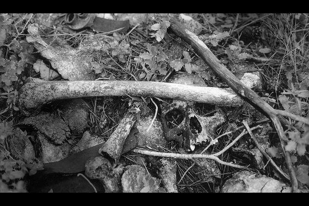 Il attend une tombe.Ses os émergent des broussailles, là où il est mort il y a plus d'un demi-siècle, près de Corbera de Ebro, un village rasé par les bombardements, au sud de l'Ebre. En haut à gauche, un débris de grenade rouillé. En bas à gauche, un morceau de cuir de sangle ou de ceinture.