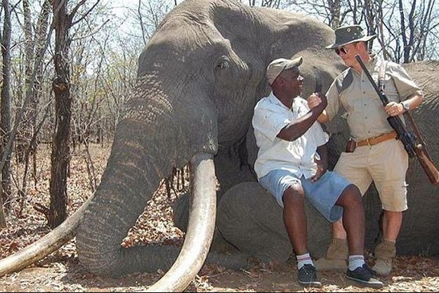Le braconnier allemand pose devant l'éléphant abattu, le 8 octobre dernier.
