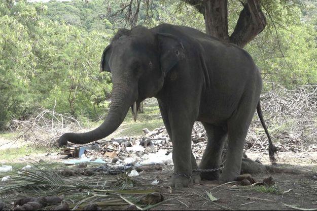 Un touriste britannique a été tué par l'éléphant sur lequel il se trouvait, en Thaïlande.