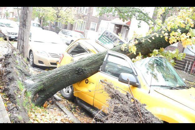 Un célèbre taxi jaune de New York écrasé par un arbre.