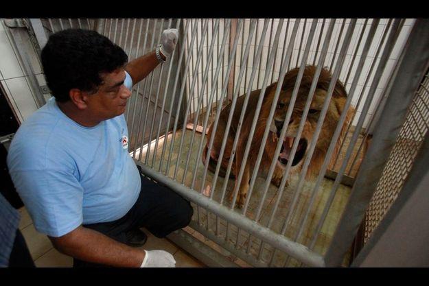 Sans l'intervention des membres de l'association, de nombreuses bêtes auraient sans doute succombé à la faim.