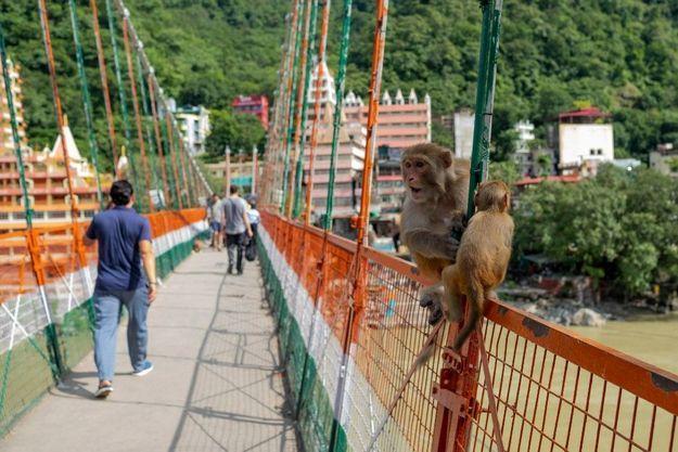 Le pont se situe non loin de l'ashram où les Beatles avaient choisi de faire une retraite spirituelle en 1968, et Rishikesh, au pied de l'Himalaya, est très prisé par les randonneurs et les amateurs de yoga.