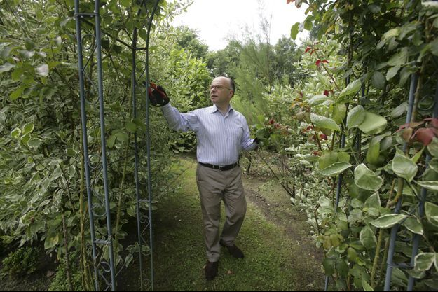 Bernard Cazeneuve dans le jardin de sa maison de l'Oise, en juillet dernier, lorsqu'il a reçu Match. Le ministre est un passionné de botanique.