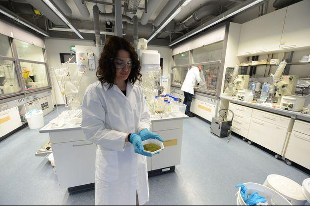 Entre les mains de Mara Guidi, 31 ans, doctorante au service des flux chimiques, dirigé par l'Américain Kerry Gilmore (au fond), quelques feuilles pilées. Au laboratoire de l'Institut Max Planck de Potsdam, le 30 avril.