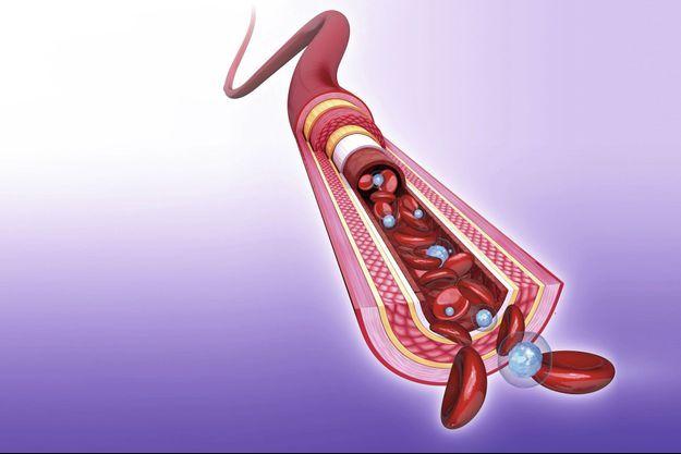 Coupe d'artère avec ses différentes structures. L'endothélium est la partie attaquée par le Sars-CoV-2