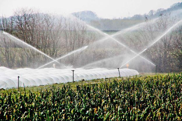 Cultures maraîchères : un pesticide définitivement interdit