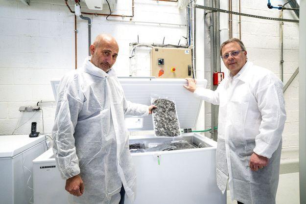 Le professeur Laurent Lantieri (à g.) et le biologiste Franck Zal dans le laboratoire de la société de techno-biologie Hemarina, à Morlaix. Dans le congélateur, les sacs de vers marins de Noirmoutier.